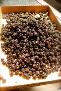 Box of blackberries